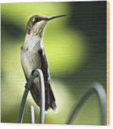 Ruby-throated Hummingbird Wood Print by Christina Rollo