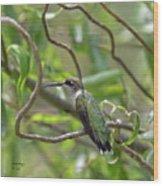 Ruby-throated Hummingbird - Female Wood Print