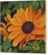 Rudbeckia Flower In Bloom Wood Print