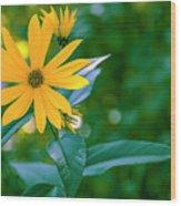 Rudbeckia Flowers In Bloom Wood Print