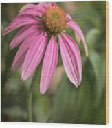 Rudbeckia Morning Wood Print