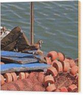 Ruddy Turnstones Perching On Fishing Nets Wood Print