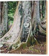 Rudraksha 1 Wood Print