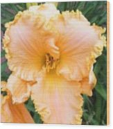 Ruffled Day Lily Wood Print