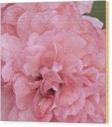 Ruffled Pink Rose Wood Print