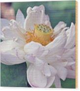 Ruffly Lotus Wood Print