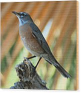 Rufous-backed Robin Wood Print