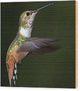 Rufous Hummingbird In Flight Wood Print