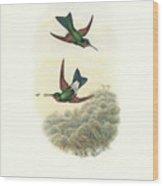 Rufous-webbed Brilliant Hummingbird Heliodoxa Branickii Wood Print