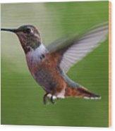 Rufus Hummingbird In Flight Wood Print