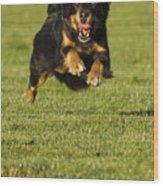 Run Dog Run Wood Print