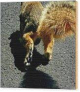 Runaway Fox Squirrel Wood Print