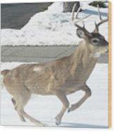 Running Buck Wood Print