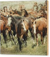 Running Free Horses IIi Wood Print