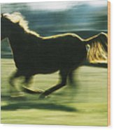 Running Horse Backlit Wood Print