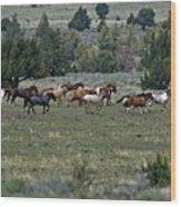 Running Wild Horses  Wood Print