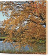 Rural Autumn Country Beauty Wood Print