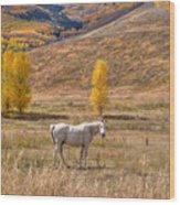 Rural Colorado  Wood Print
