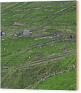 Rural Landscape On Dingle Peninsula Wood Print