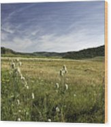 Rural Scenic Landscape Wood Print