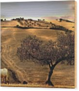 Rural Spain View Wood Print