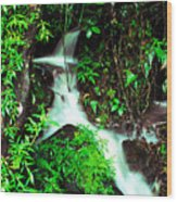 Rushing Stream El Yunque National Forest Mirror Image Wood Print