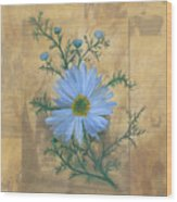 Russias Chamomile Wood Print