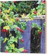 Rustic Fence And Wild Rosehips Wood Print