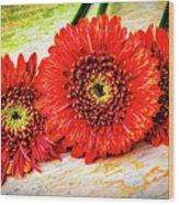 Rustic Red Dasies Wood Print