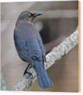 Rusty Blackbird Wood Print