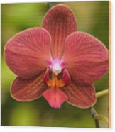 Rusty Orchid Wood Print