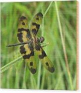 Ryothemis Dragonfly Wood Print