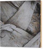 Sabel Palm 2 Wood Print