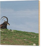 Sable Antelope On Hill Wood Print
