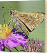 Sachem Skipper Wood Print