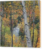 Saco River And Birches Wood Print