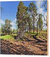 Sacred Canyon, Flinders Ranges Wood Print
