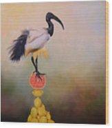 Sacred Ibis Lemon Pyramid Wood Print