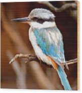Sacred Kingfisher Wood Print