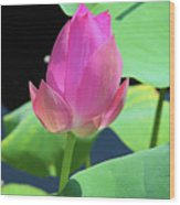 Sacred Pink Wood Print