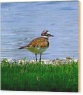 Sad Bird Near Pond Wood Print