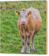 Sad Cow - Painterly Wood Print