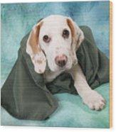 Sad Dog On Pastels Wood Print