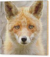 Sad Eyed Fox Of The Lowlands - Red Fox Portrait Wood Print