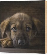 Sad Puppy Wood Print by Bob Nolin
