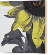 Sad Sunflower Wood Print
