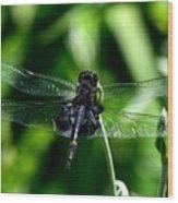 Saddlebag Dragonfly Wood Print