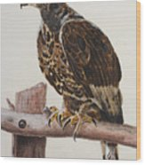 Safari Hawk Wood Print
