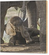 Safest Baby In Africa  Wood Print