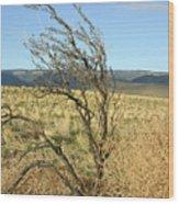 Sage Brush And Tumble Weed Wood Print